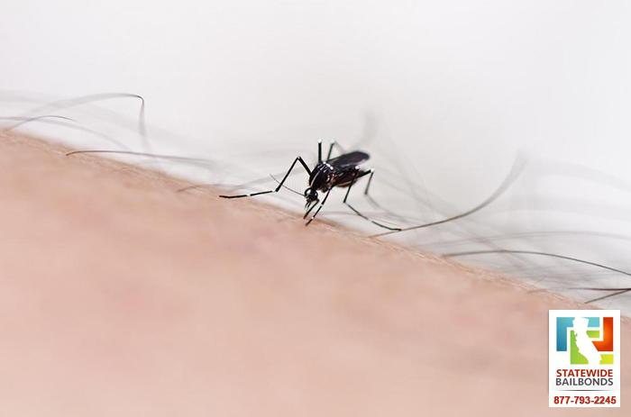How to Prevent Mosquitos